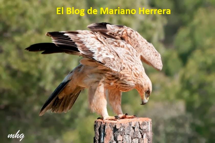 El blog de Mariano Herrera
