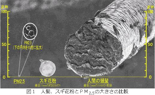 PM2.5とスギ花粉、髪の毛の大きさの比較
