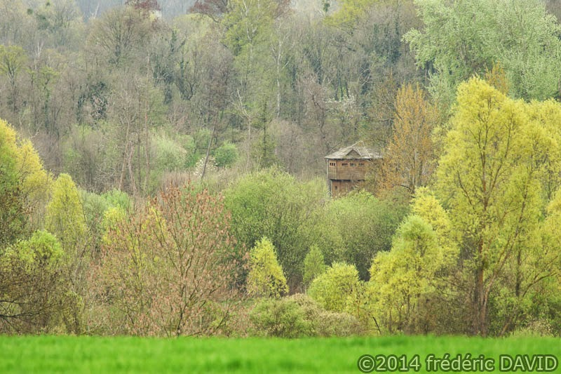 forêt observatoire printemps végétation Essonne