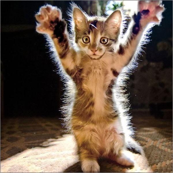 gambar kucing - gambar kucing lucu terbaru