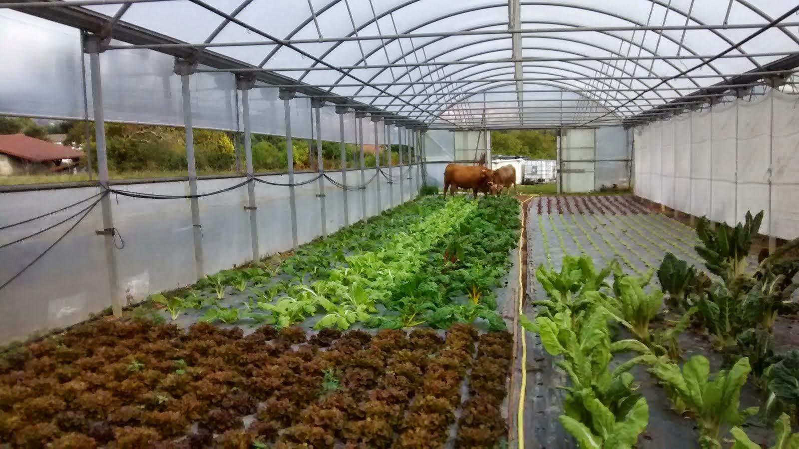 horticultura ecologica: