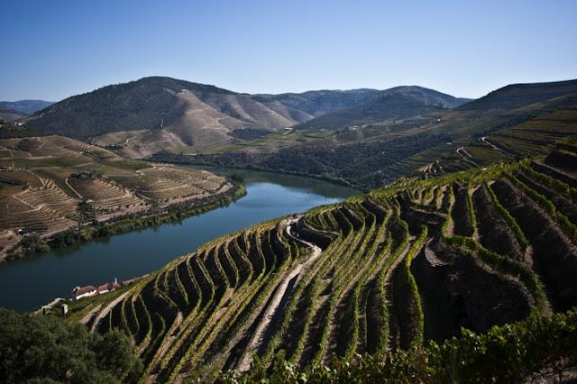 Divulgação: Real Companhia Velha propõe Harvest Experience em duas quintas no Douro - reservarecomendada.blogspot.pt