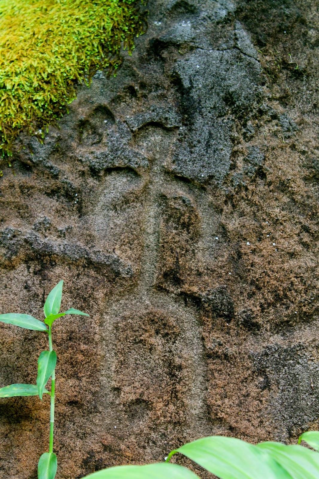 Justin D. Kondrat : National Tropical Botanical garden week 5