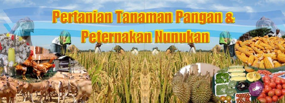 Pertanian Tanaman Pangan dan Peternakan Nunukan