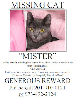 Missing Cat 