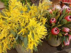 Kwiaty na Maderze:)