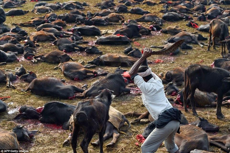 imagenes de los animales mas grandes del mundo - Los Animales Mas Grandes Del Planeta [2015] Fotos