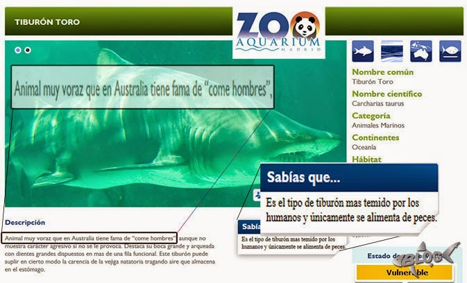 tiburón nodriza gris Zoo Madrid