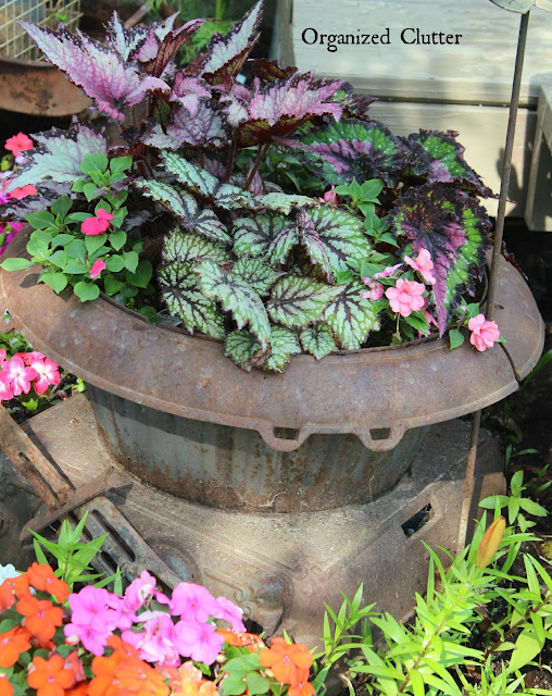 Jurassic Begonias & Impatiens Planted in Iron Stove www.organizedclutter.net