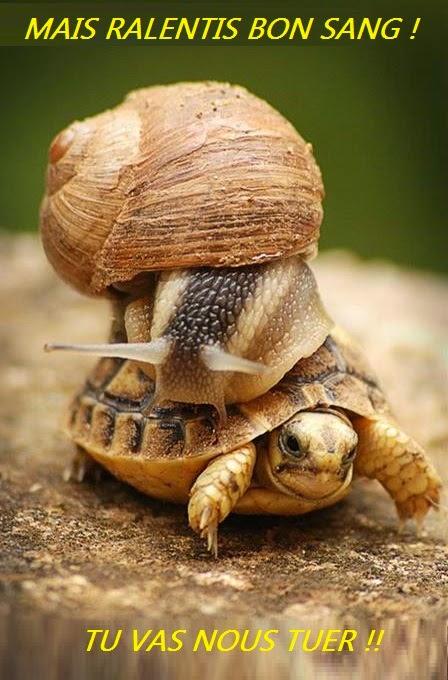 big+snail+escargot+geant+giant