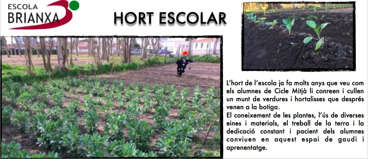 L'HORT DE L'ESCOLA BRIANXA