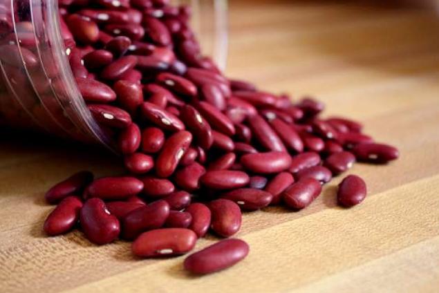 Cara Budidaya Kacang Merah Di Lahan Pertanian
