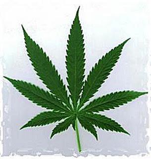 Legalzing Cannabis