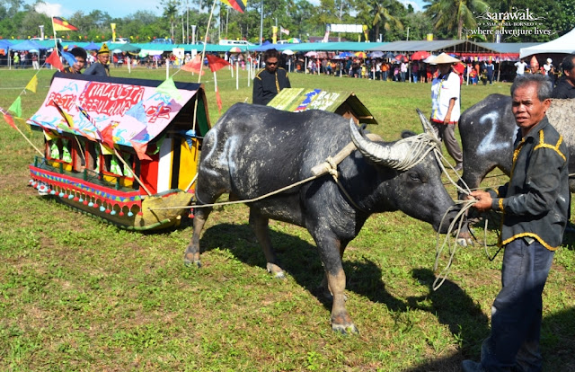 Bisaya Buffalo Race Festival in Limbang Sarawak Decorated float