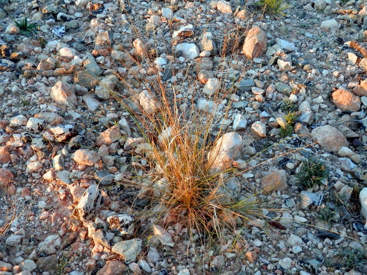 En suelo pedregoso for Suelo pedregoso