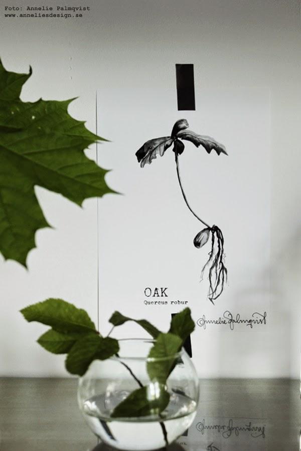 ekollon tavla, oak poster, posters, konsttryck, print, prints, tavlor, artprint, artprints, webbutik, annelies design interior, anneliesdesign, svart och vitt, svartvit, svartvita, svart, vitt, vit, vita, webbutik, webbutiker, webshop