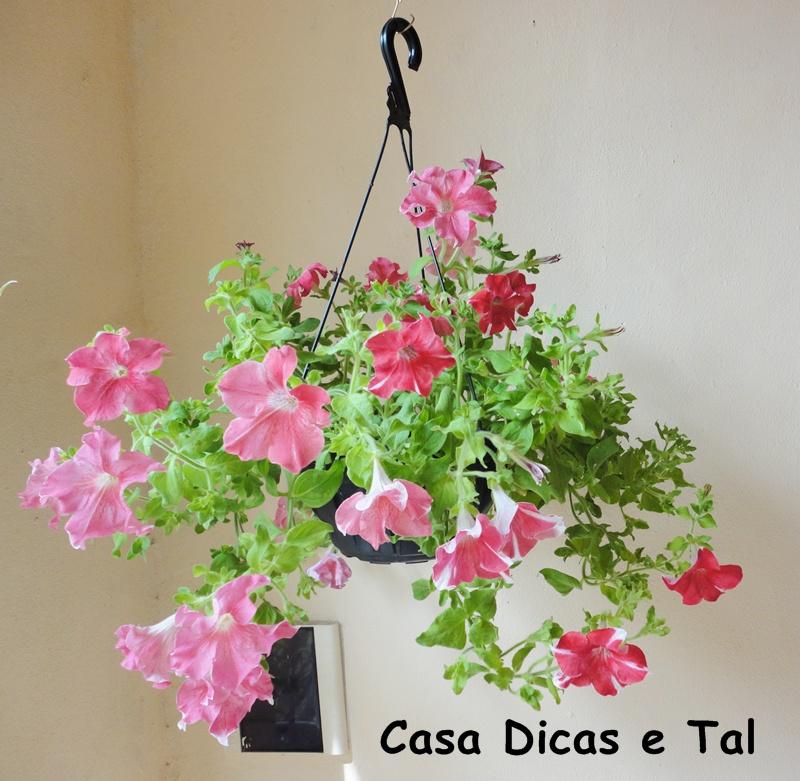 flores jardim de sol : flores jardim de sol:as plantas têm o poder de me acalmar,sempre que estou triste fico