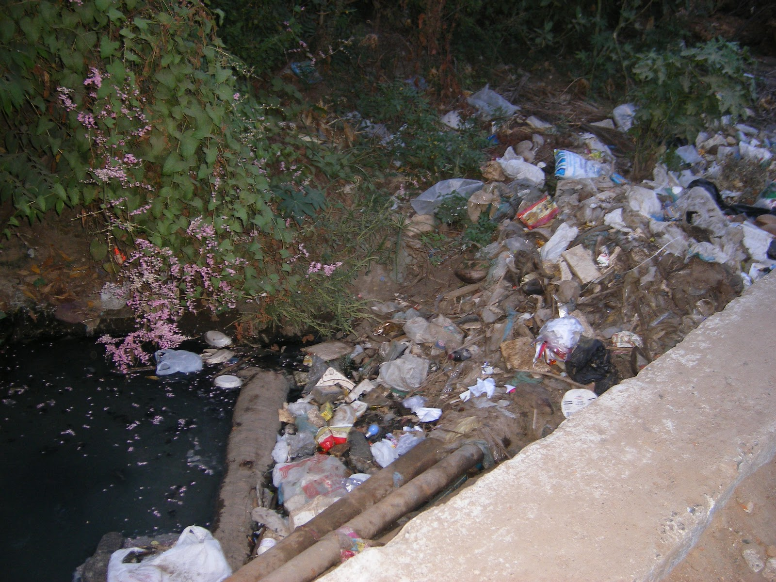 thesis on water pollution in india Essay for college computer science phd thesis on water pollution help me type my essay start an essay with a quote.