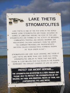 Lake Thetis Stromatolites, Cervantes, WA - own image