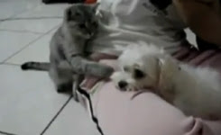 Impolite cat hits dog