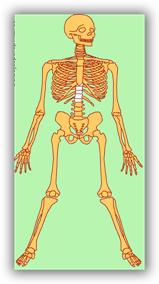 http://www.dibujosparapintar.com/juegos_ed_nat_partes_esqueleto.html