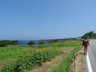 県道45号沿いのひまわり畑