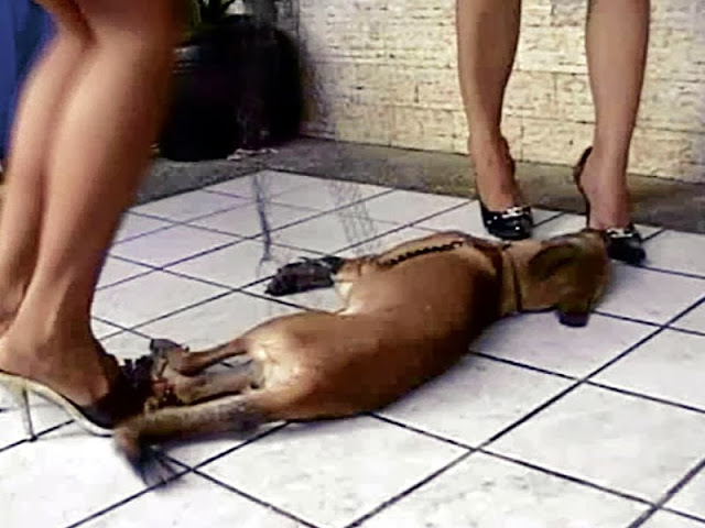 Alledged Filipinas Girls Crush Wailing Puppy To Day [Graphic Video]