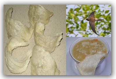 Manfaat Khasiat Sarang Burung Walet Untuk Kesehatan