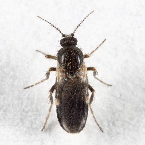 records d 39 insectes les battements d 39 ailes les plus rapides. Black Bedroom Furniture Sets. Home Design Ideas