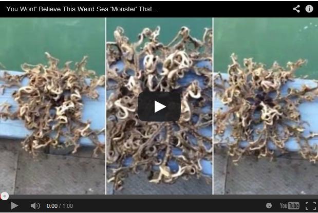 Nelayan terkejut pukatnya tertangkap sejenis makhluk aneh