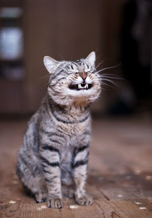 10 Most Happy Cats Of Our Community