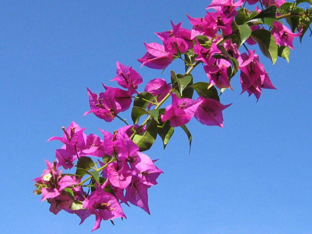 jardim ideias simples:Setembro começou e torcendo para que chegue a primavera, saí para