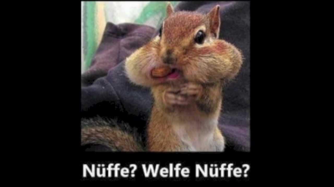 Incursio Der FUN Blog: Lustiges Eichhörnchen