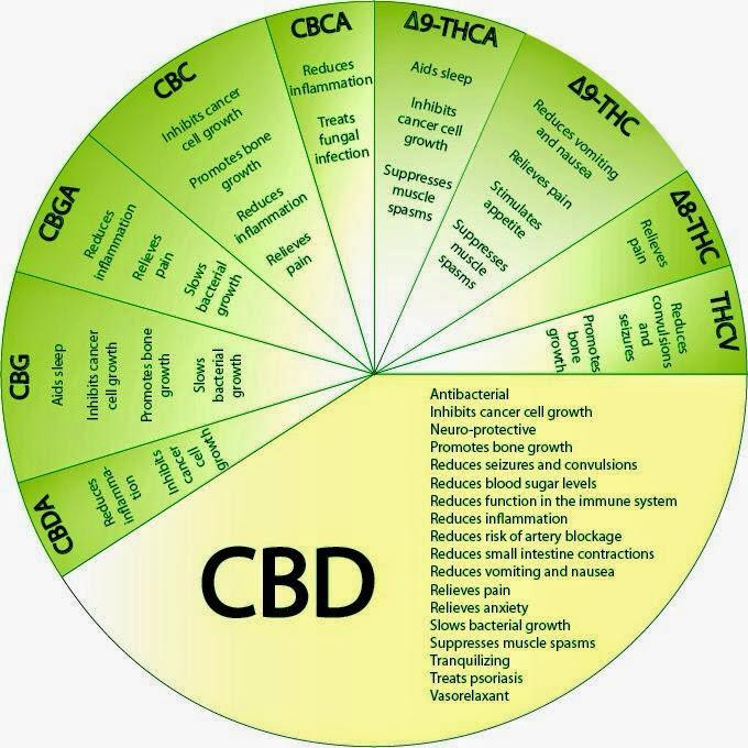 A substância dos medicamentos com maconha medicinal baseia-se em uma estrutura com 84 canabinóides.