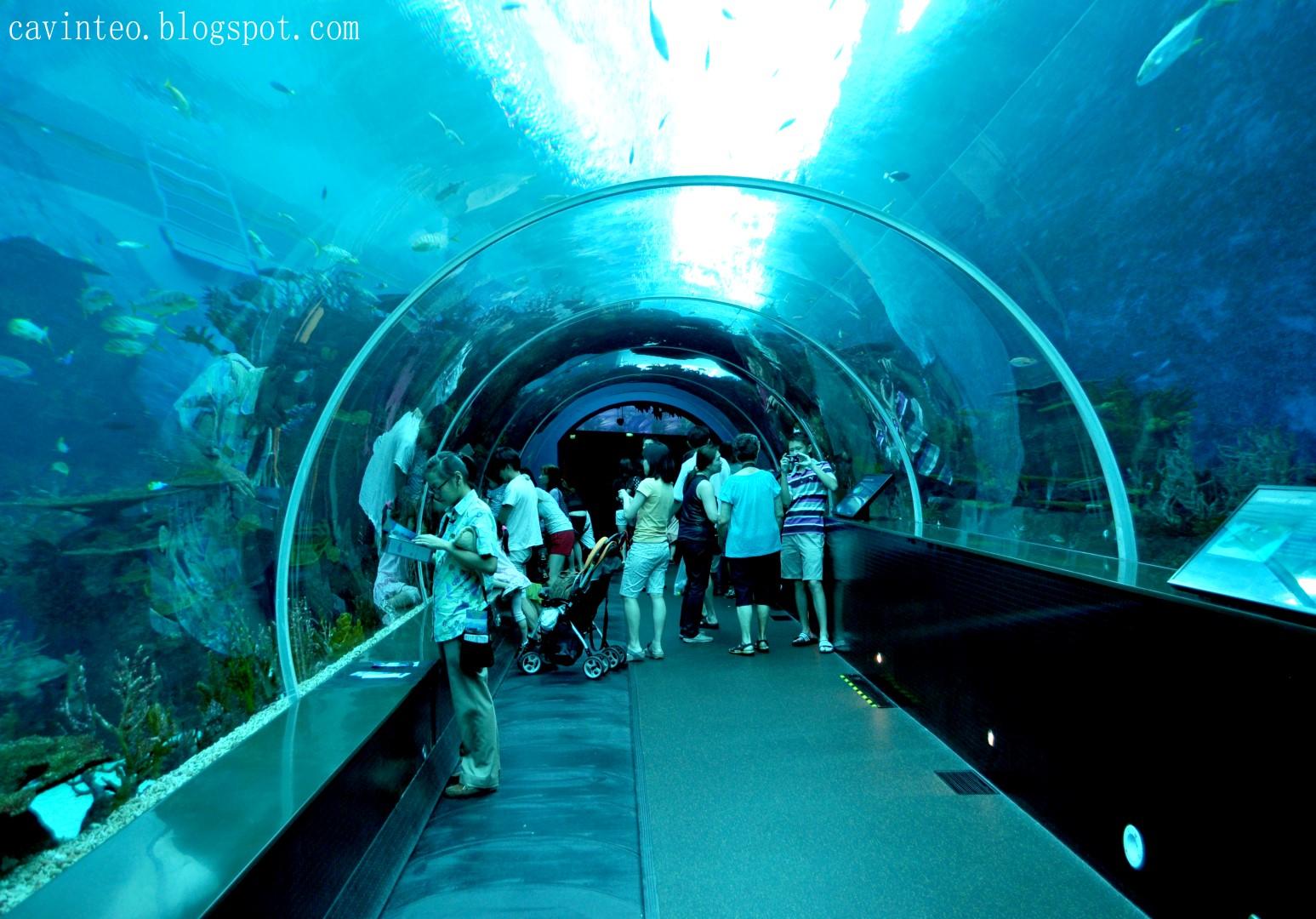 Entree Kibbles SEA Aquarium Worlds Largest Aquarium and