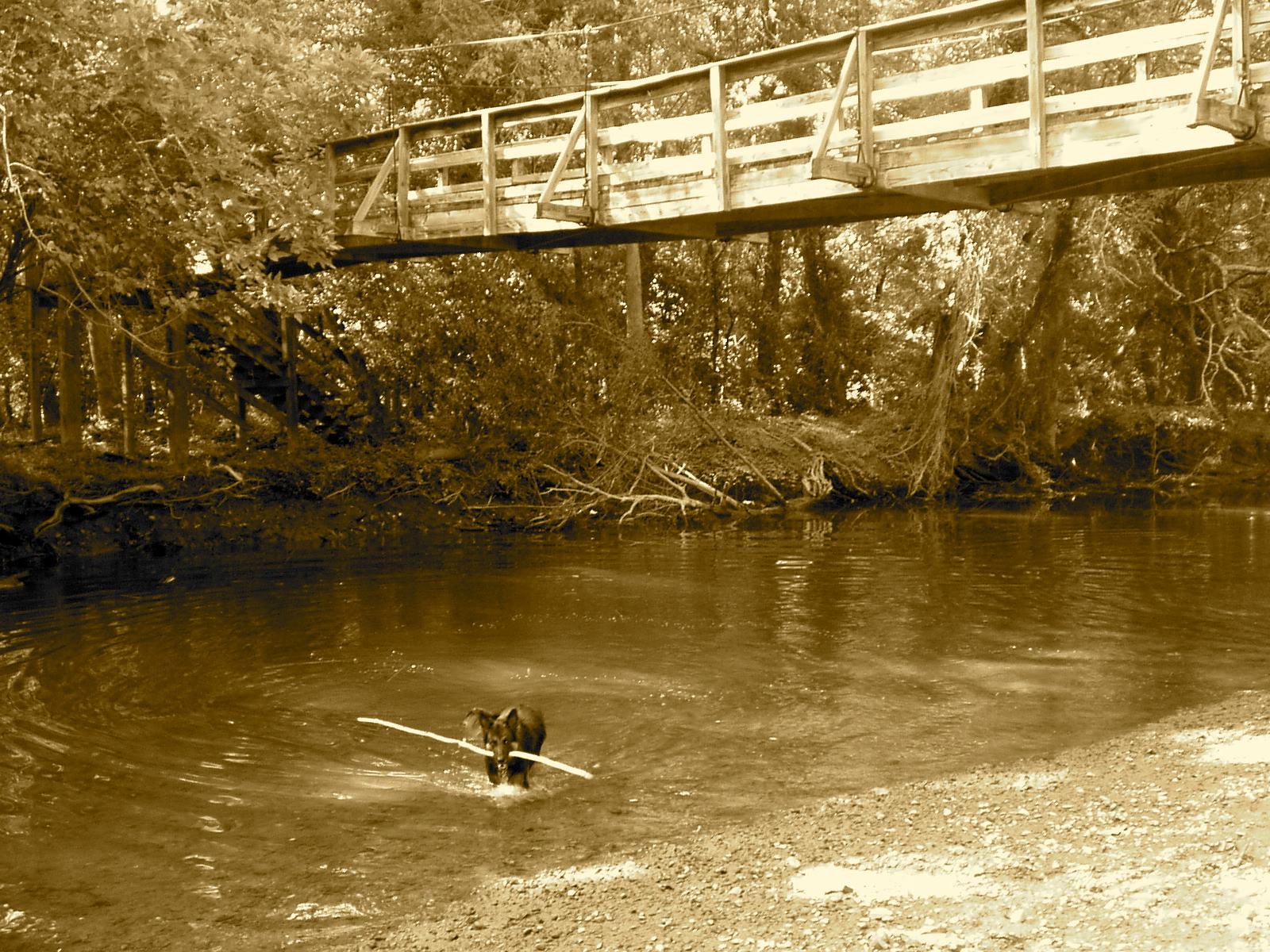 Lake Accotink Dog Park