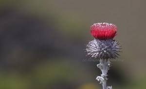 Point Reyes National Seashore Wildflower