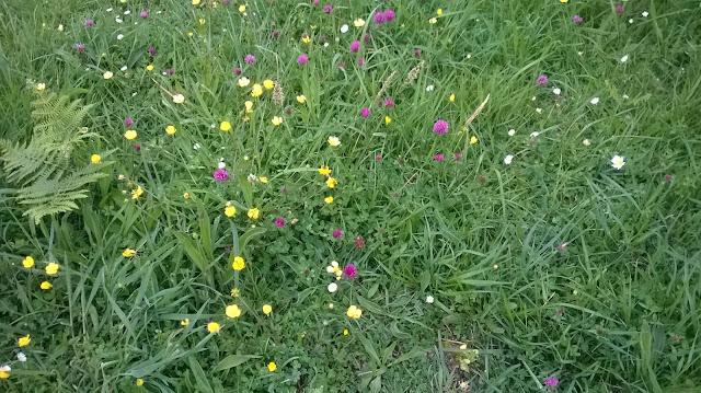 flores de colores Asturias