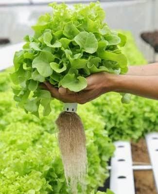 www.herbs-hydro.pl.jpg