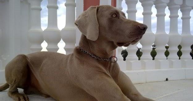 el perro mas    del mundo  el perro mas bonito del mundo