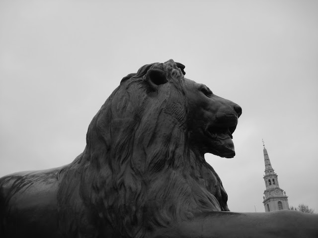 Lion statue in Trafalgar Square London, England.
