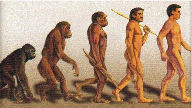 Evolcuión del Hombre