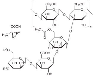 chemical structure of xanthan gum