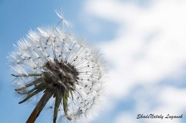 Воздушный цветок