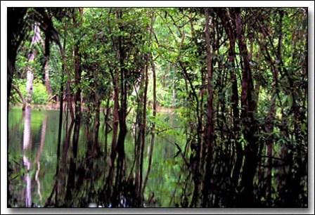 hutan hujan amazon