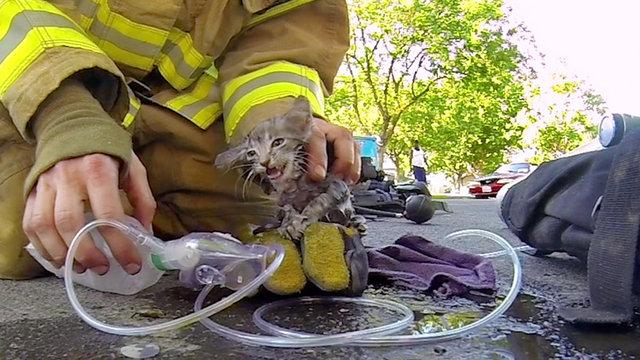 Συγκινεί στο διαδίκτυο ο Πυροσβέστης που σώζει γατάκι - Βίντεο