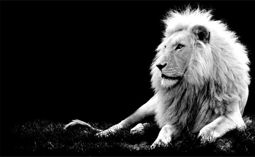 Black And White Animal Photography