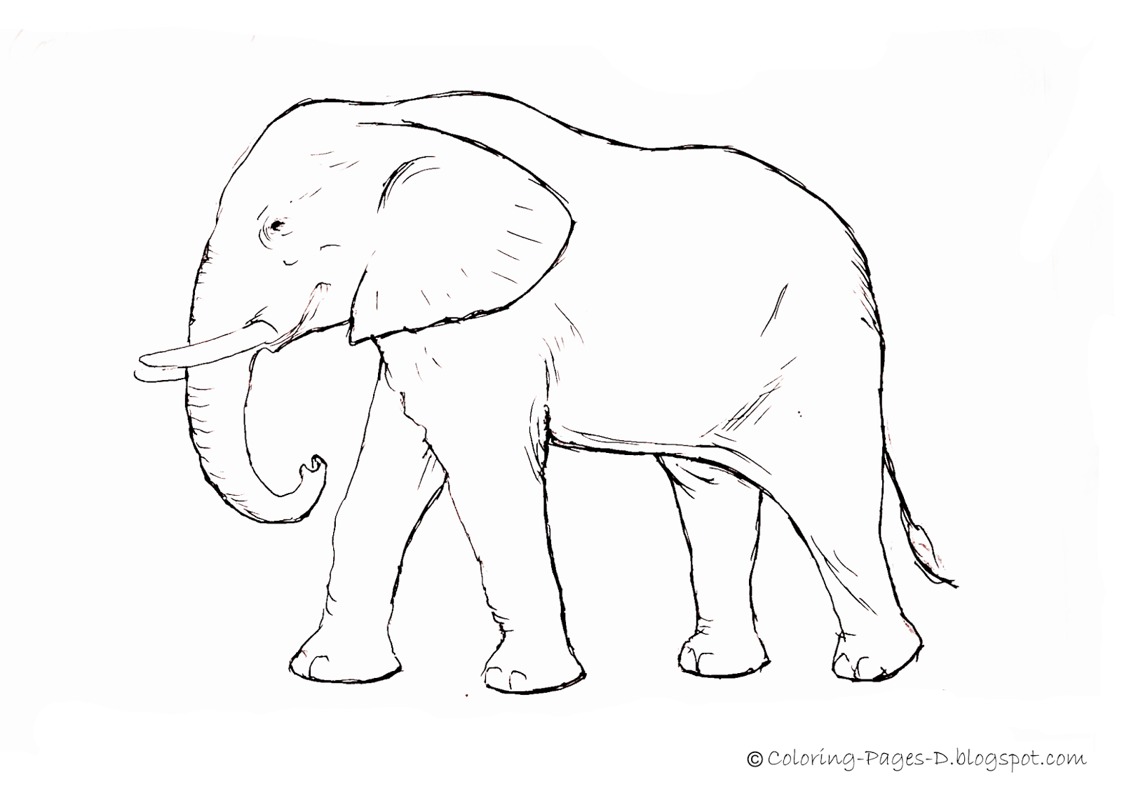 Printable Coloring Pages Of Baby Elephants Printable