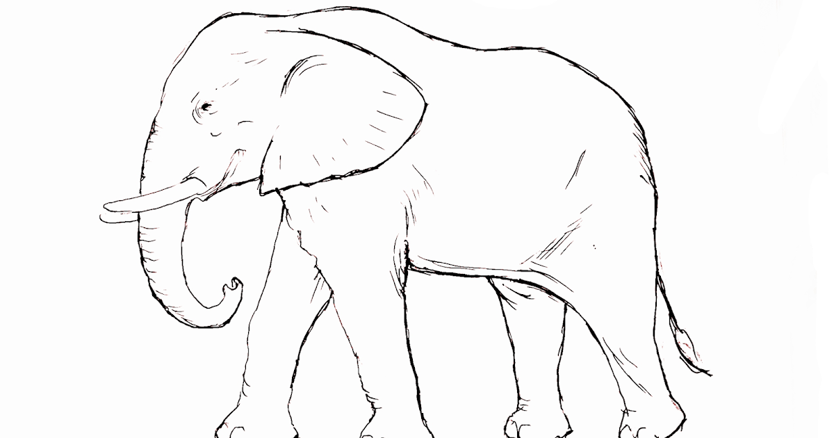 Coloring Pages D Free Elephant Coloring Pages