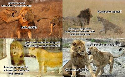 celos en animales, risa